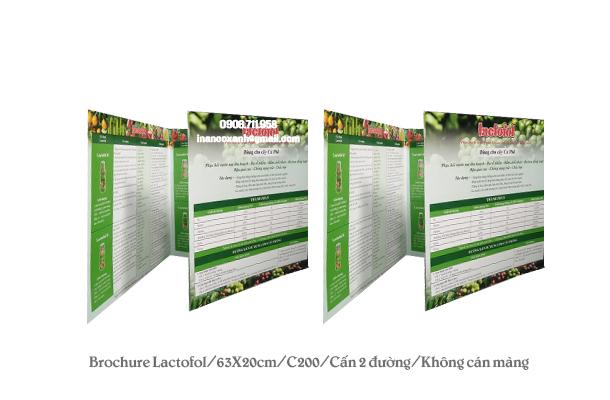 Mẫu brochure Latofol